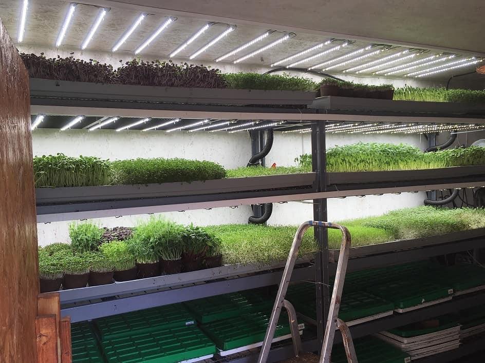 Einbau der automatischen Bewässerung
